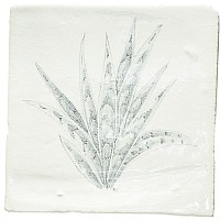 Botanical Etchings 8