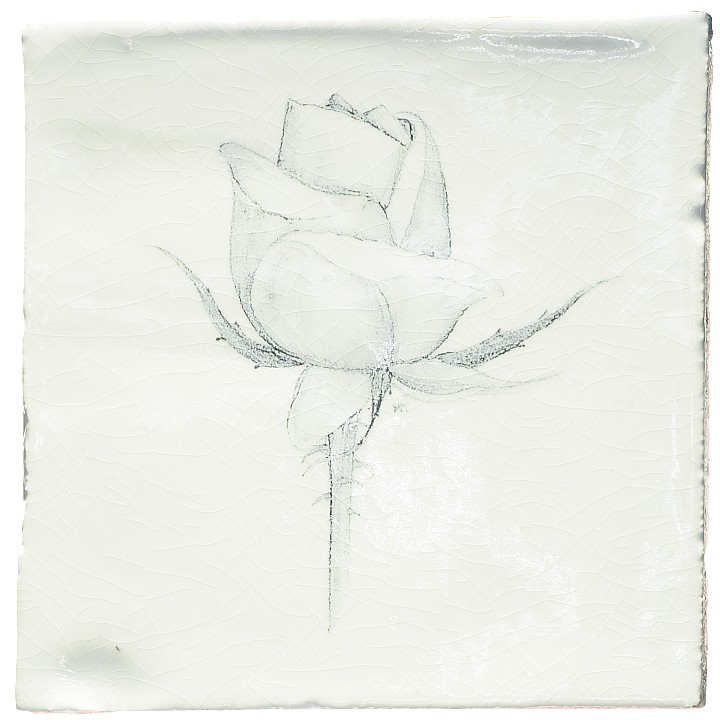 Botanical Etchings 11