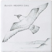 Black Headed Gull 12